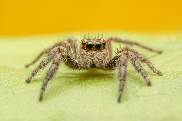 сниться павук